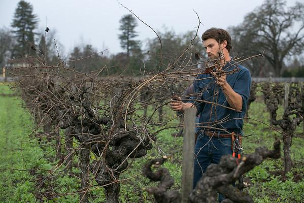 Winemaker Rory Williams