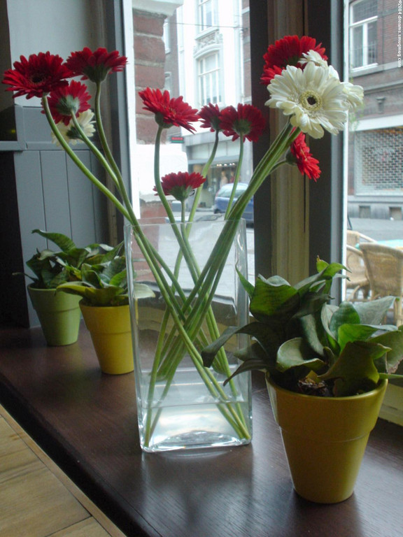 Beautiful Gerberas in the window pane