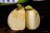 Garlic 1/17/2012