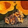 A Taste of Autumn