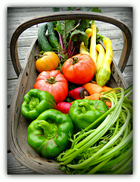 Sunday Harvest