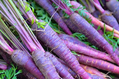 Purple Carrots Rock