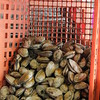 Steam Clams in a Basket