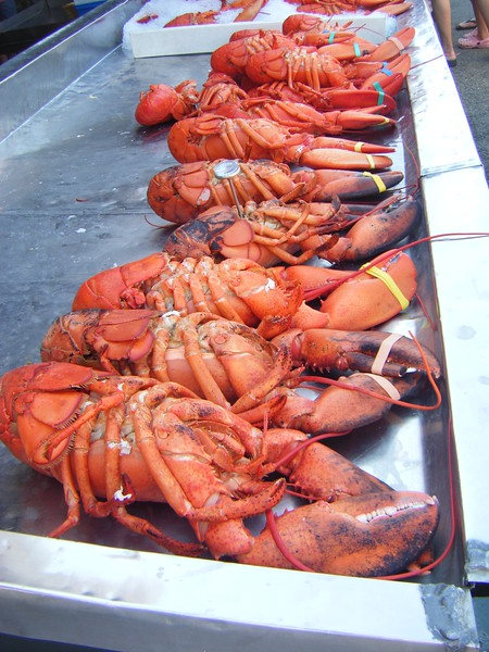 Lobster line-up