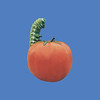 Tomato with Caterpillar, 5'H #6017<br /> Tomato, 3'H  #6060