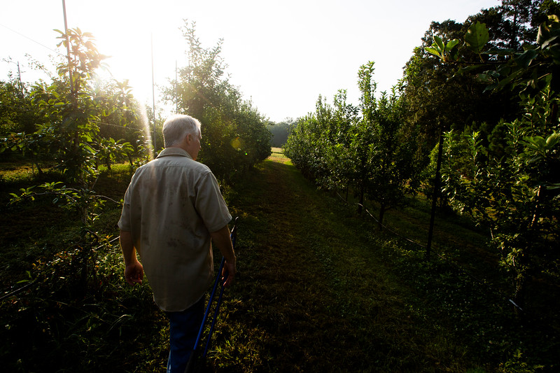 Nadav Soroker/Times-Georgian<br /> <br /> Brian Heatherington shows off the orchard at Beech Creek Farms, on Friday, July 13, 2018.
