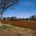 Seagulls following a tractor