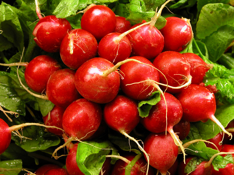 Radishes from the garden  Copyright - W. Keith Baum | PhotoCanal.com