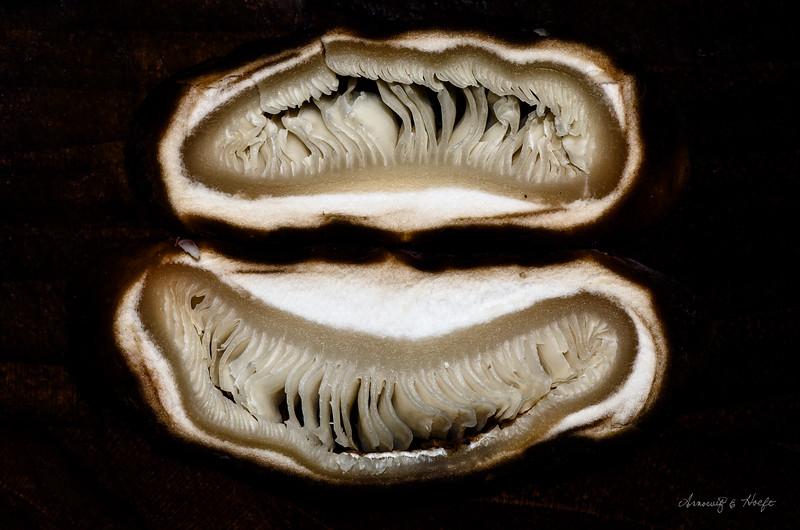 Mushroom 1/3/2012