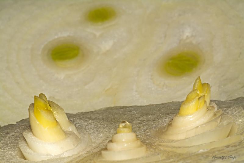Onion  12/8/2014