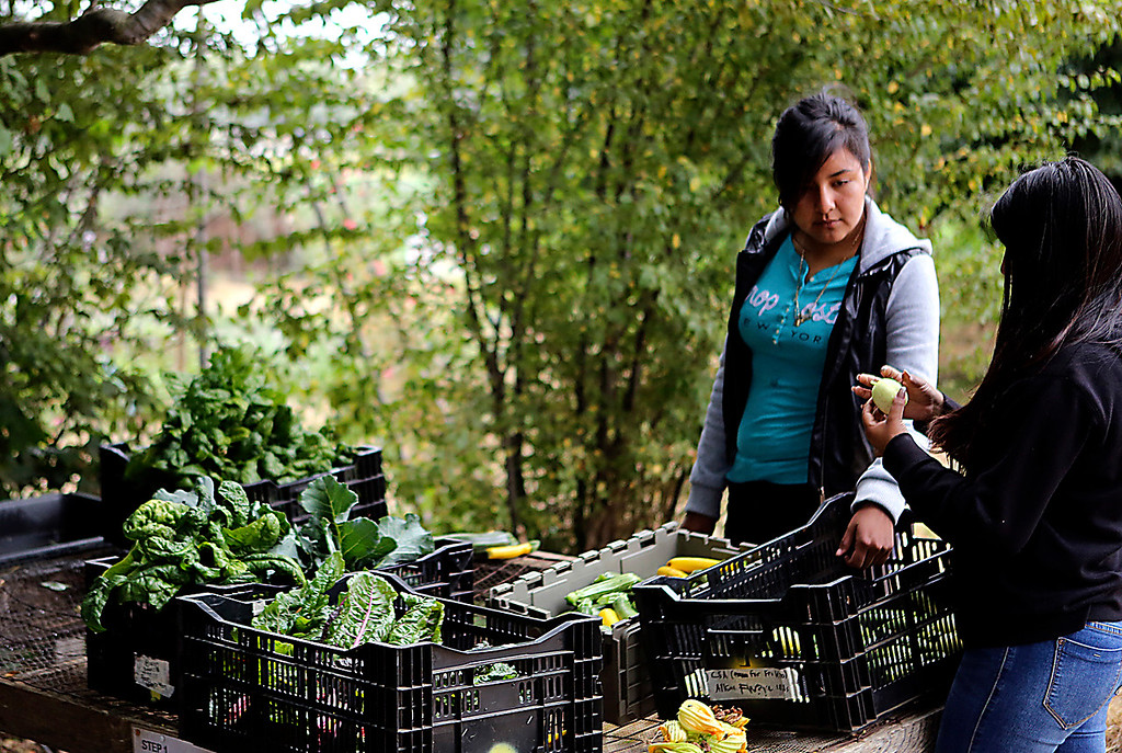 . Mayra Flores and Isabel Sosa clean and sort fresh produce to bring home to their families as part of being part employed by Food,What?!. (Shmuel Thaler -- Santa Cruz Sentinel)