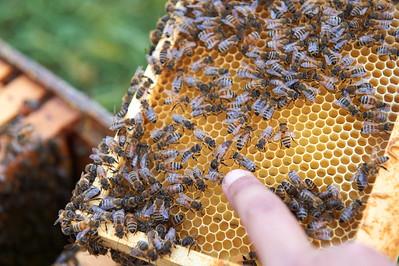 6 11 19_Foodographer_HoneyBees_JBP03