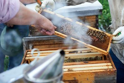 6 11 19_Foodographer_HoneyBees_JBP19