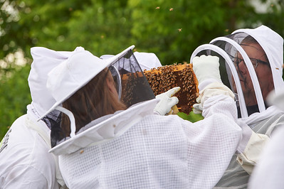 6 11 19_Foodographer_HoneyBees_JBP14