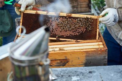 6 11 19_Foodographer_HoneyBees_JBP20