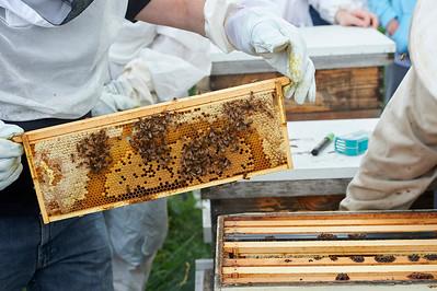 6 11 19_Foodographer_HoneyBees_JBP22