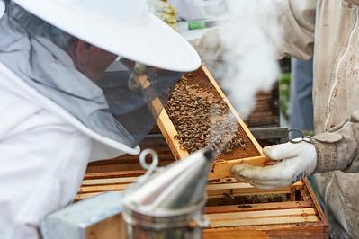 6 11 19_Foodographer_HoneyBees_JBP15