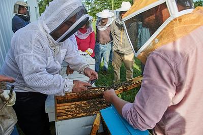 6 11 19_Foodographer_HoneyBees_JBP02