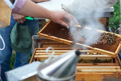 6 11 19_Foodographer_HoneyBees_JBP18