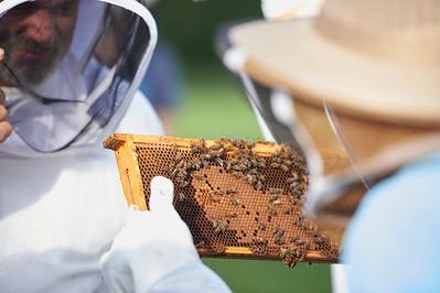 6 11 19_Foodographer_HoneyBees_JBP07