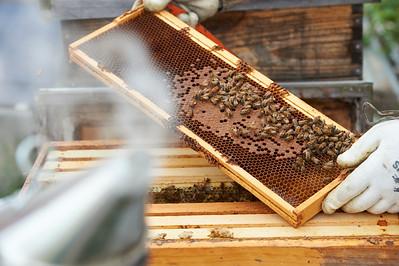 6 11 19_Foodographer_HoneyBees_JBP16