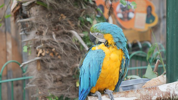 Macaw Colourful parrots