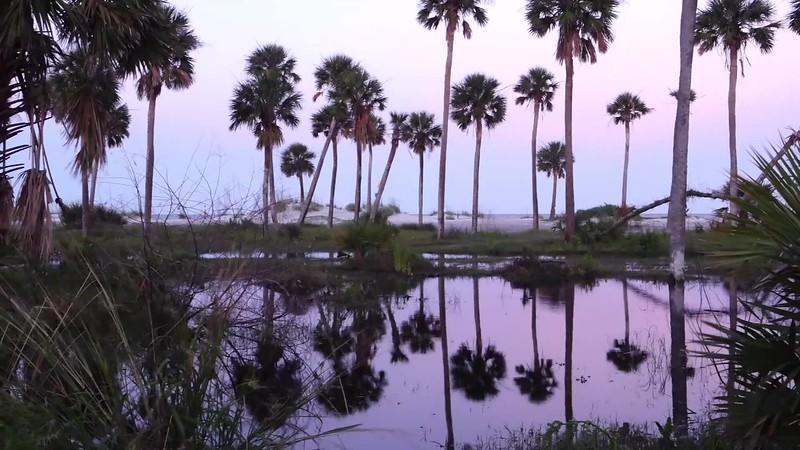 Beautiful nature on hunting island south carolina