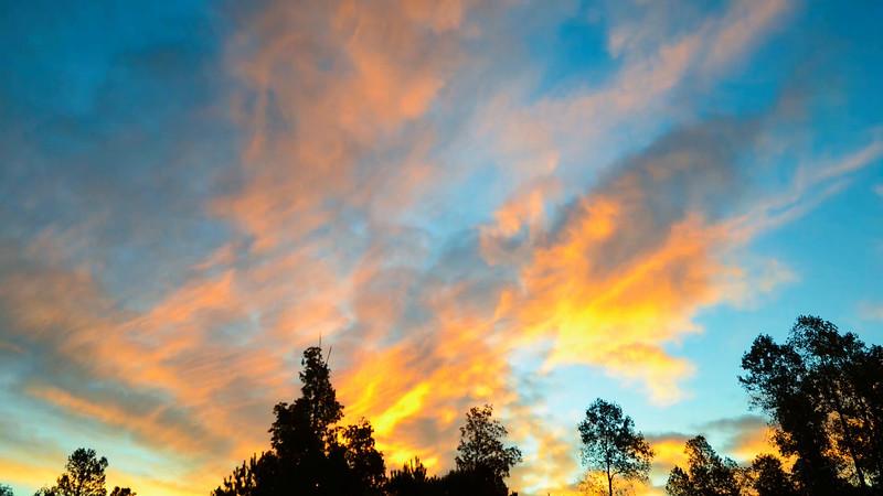beautiful early morning sunrise over treetops