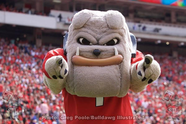 Hairy Dawg Gallery