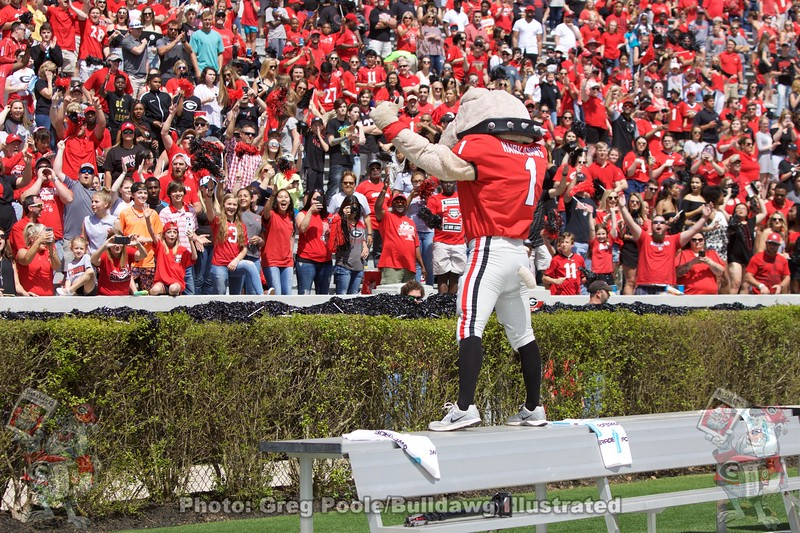 Hairy Dawg pumps up the crowd