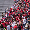 Dawg Walk entering Sanford Stadium