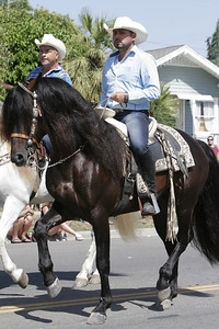 "A ""dancing"" horse in perfect gait during the 2014 Woodlake Lion Rodeo Parade."