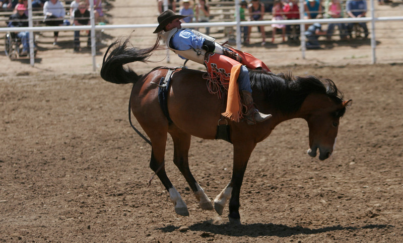 A cowboy hangs on during the Bareback Bronc riding portion of the 2014 Woodlake Lions Rodeo.