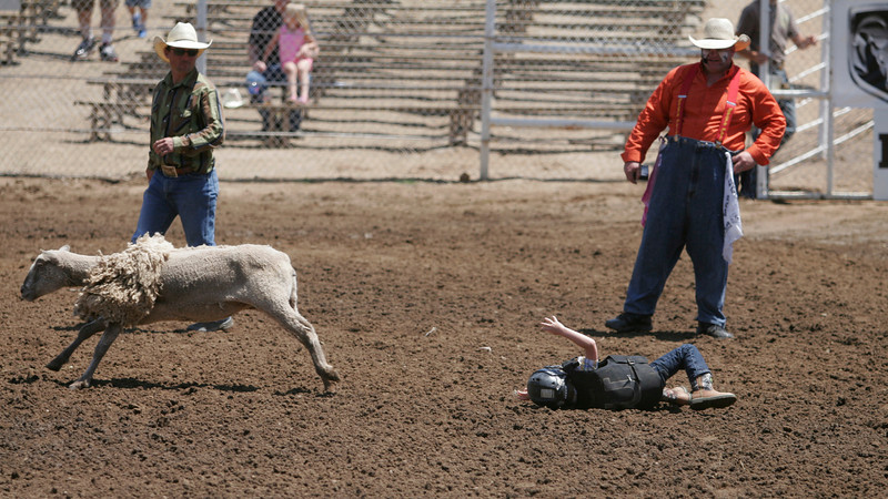 A mutton buster looses his sheep during the preliminaries to the 61st Annual Woodlake Lions Rodeo.