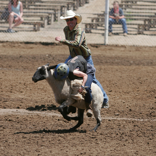 This mutton buster shows 'um how its done. She rode for the full 8 seconds and took home the belt buckle at the 61st Annual Woodlake Lion Rodeo.