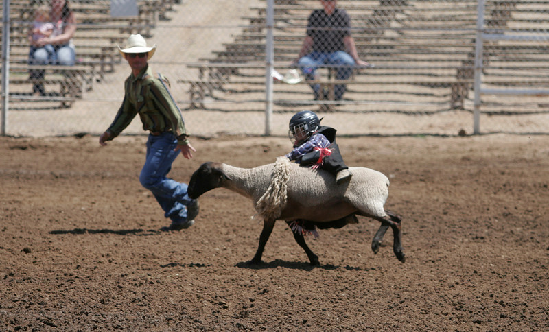 Mutton busting at the 61st Annual Woodlake Lions Rodeo on Saturday, May 10th.