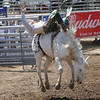 This bucking bronco leaves the ground in an effort to throw his rider during the Woodlake Lions Rodeo.