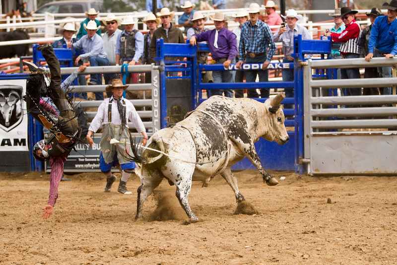 Thousands attended the 63rd edition of the Woodlake Lions Rodeo on Mothers Day weekend. This contestant exits the bull the hard way.