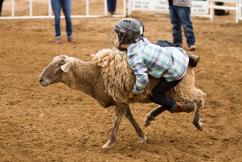 Thousands attended the 63rd edition of the Woodlake Lions Rodeo on Mothers Day weekend. A participant in the mutton busting competition hangs on.