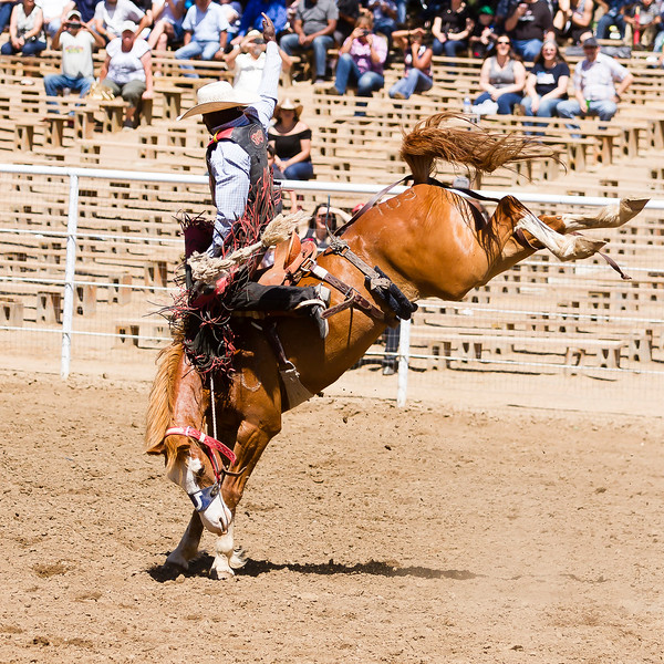 The 65th Annual Woodlake Lions Club Rodeo took place on Mother's Day weekend at the Woodlake Rodeo grounds in Elderwood. This bareback bronc rider does his best to hang on.