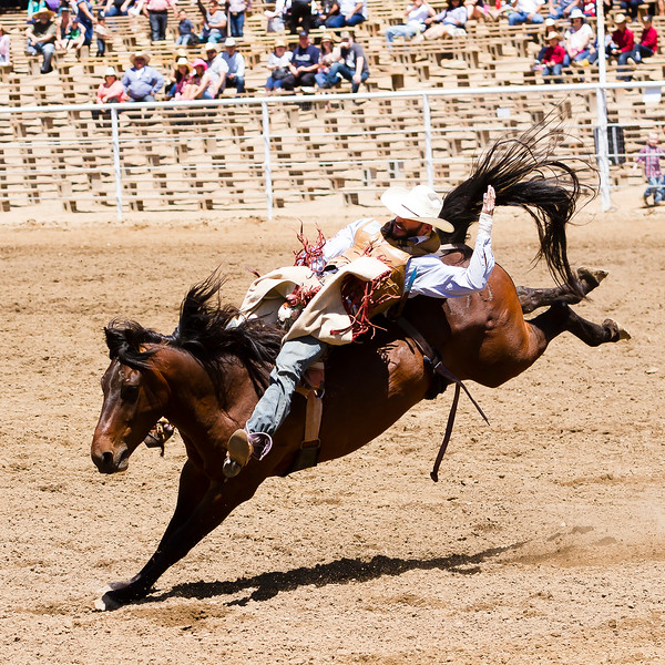 The 65th Annual Woodlake Lions Club Rodeo took place on Mother's Day weekend at the Woodlake Rodeo grounds in Elderwood.  A bareback rider hoping for 8 seconds.