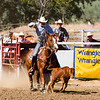 The 65th Annual Woodlake Lions Club Rodeo took place on Mother's Day weekend at the Woodlake Rodeo grounds in Elderwood. Tie-down ropers often carry the piggin' rope in their teeth until they've roped the calf and dismounted their horse.