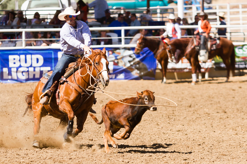The 65th Annual Woodlake Lions Club Rodeo took place on Mother's Day weekend at the Woodlake Rodeo grounds in Elderwood. This tie-down roper has his lasso right over his calf's head and is getting ready to tighten  it around the calf's horns.