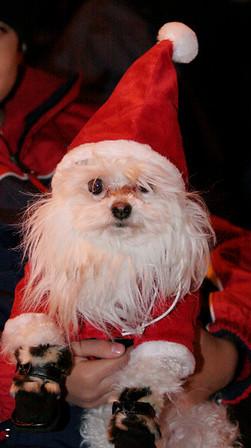 Fido Claus!