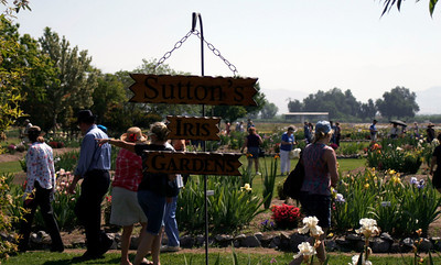 Sutton's Iris Garden on Road 208 outside of Porterville during the Porterville Iris Festival on Saturday, April 27, 2013.