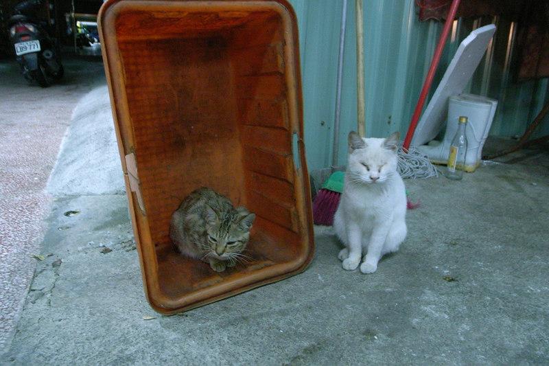 鹹粥攤旁的野貓