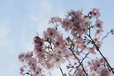 20120228_陽明山賞花