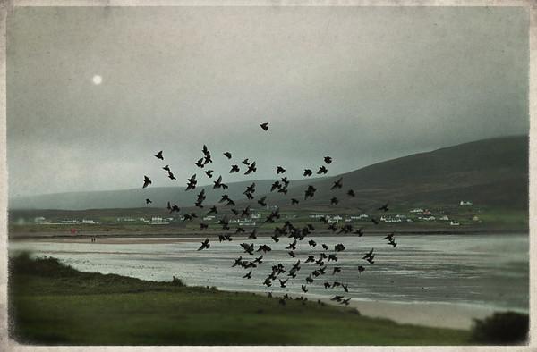 """""""starlings on Keel beach"""""""