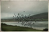 """starlings on Keel beach"""