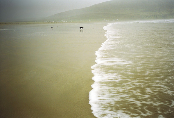"""""""the afternoon the Achill tide snuck up on the unsuspecting and trusting labrador"""""""